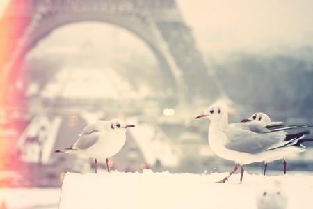 Paris-neige-2