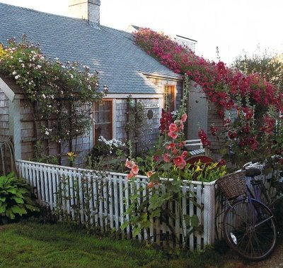 Rose-covered-cottage-Nantucket_large